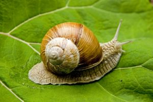 transfert PEA à la vitesse de l'escargot